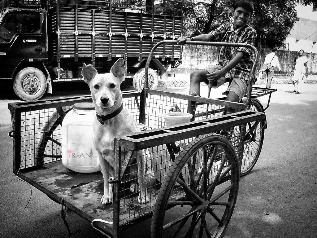 dog in cart vehicle wordpress
