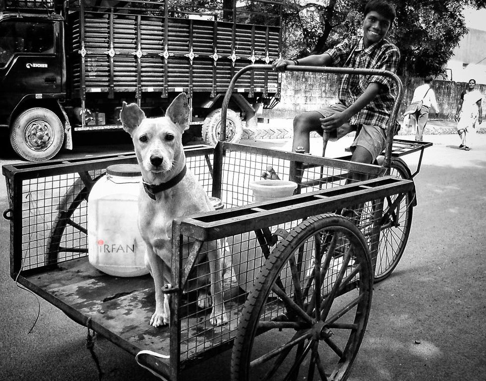 dog in cart vehicle wordpress
