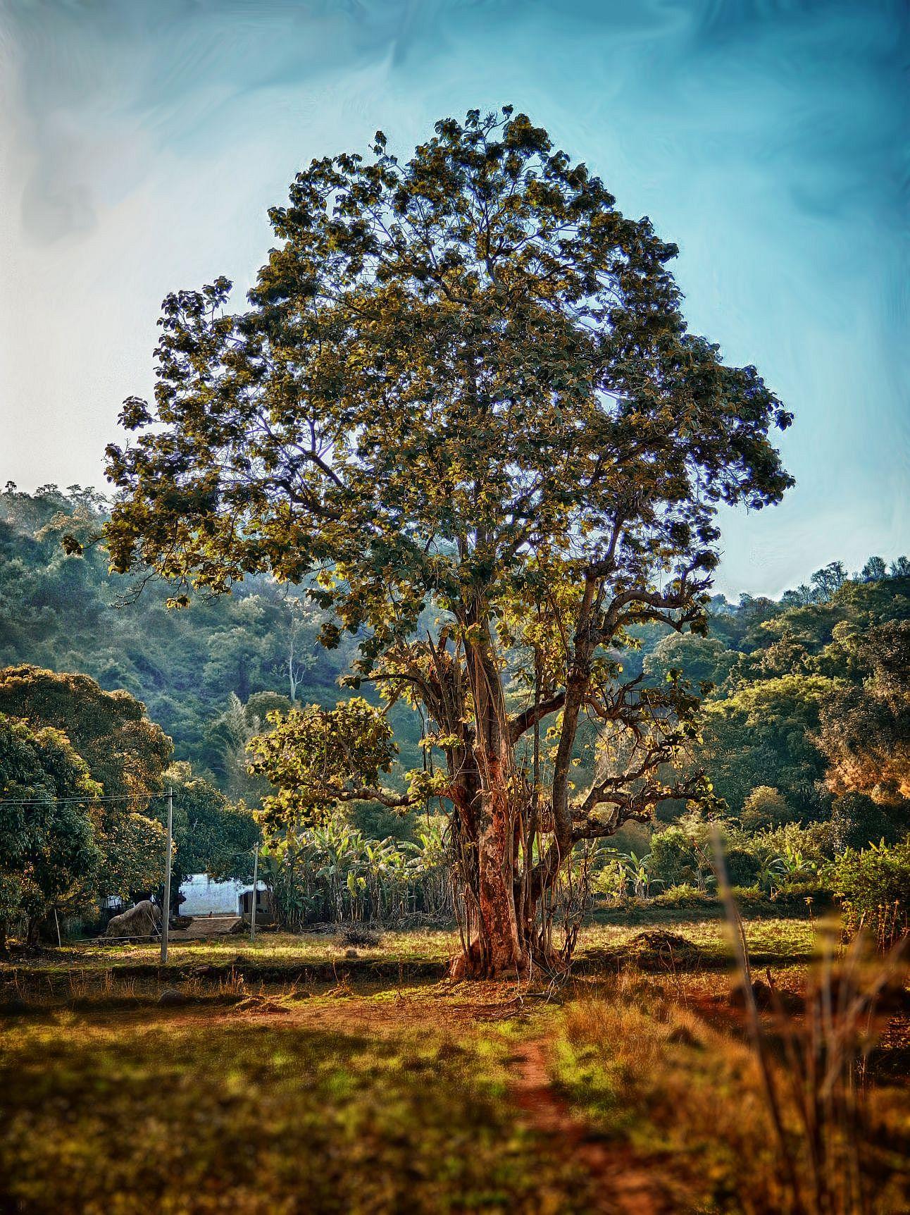 yelagiri tree wordpress