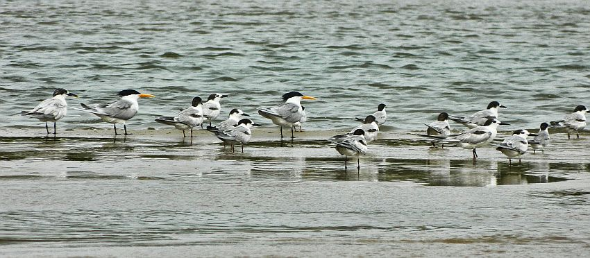 birds alamparai wordpress