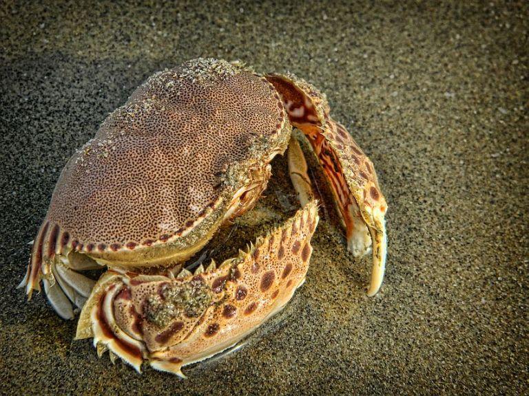 crab macro alamparai wordpress