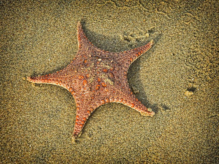 starfish macro alamparai wordpress