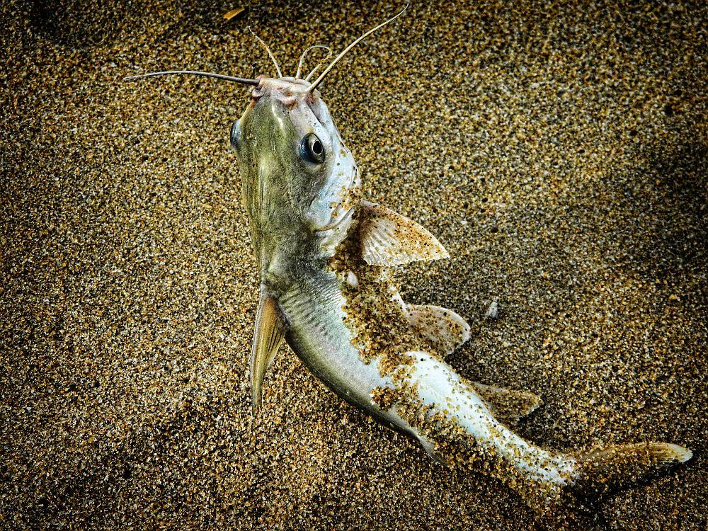 fishing cat fish broken bridge wordpress