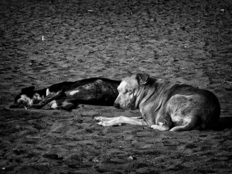 sleepy dogs wordpress