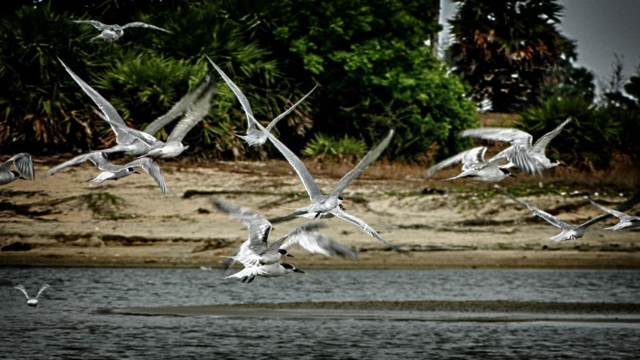 birds flying away alamparai