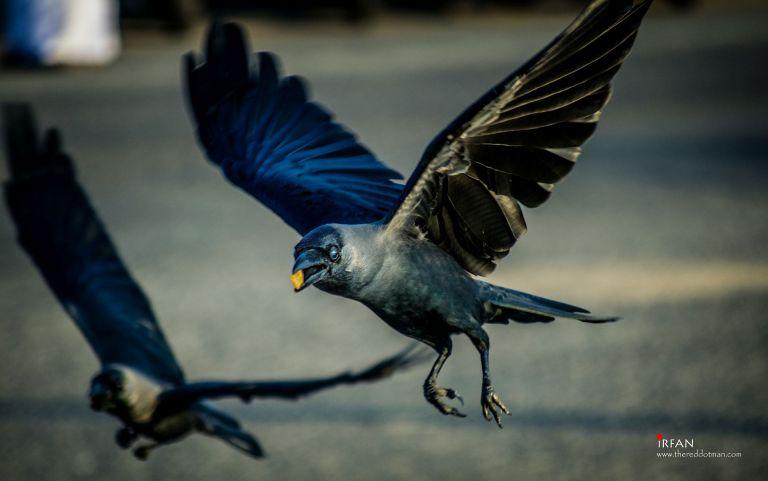 crows, gandhi, beach, chennai, thereeddotman, irfan, hussain